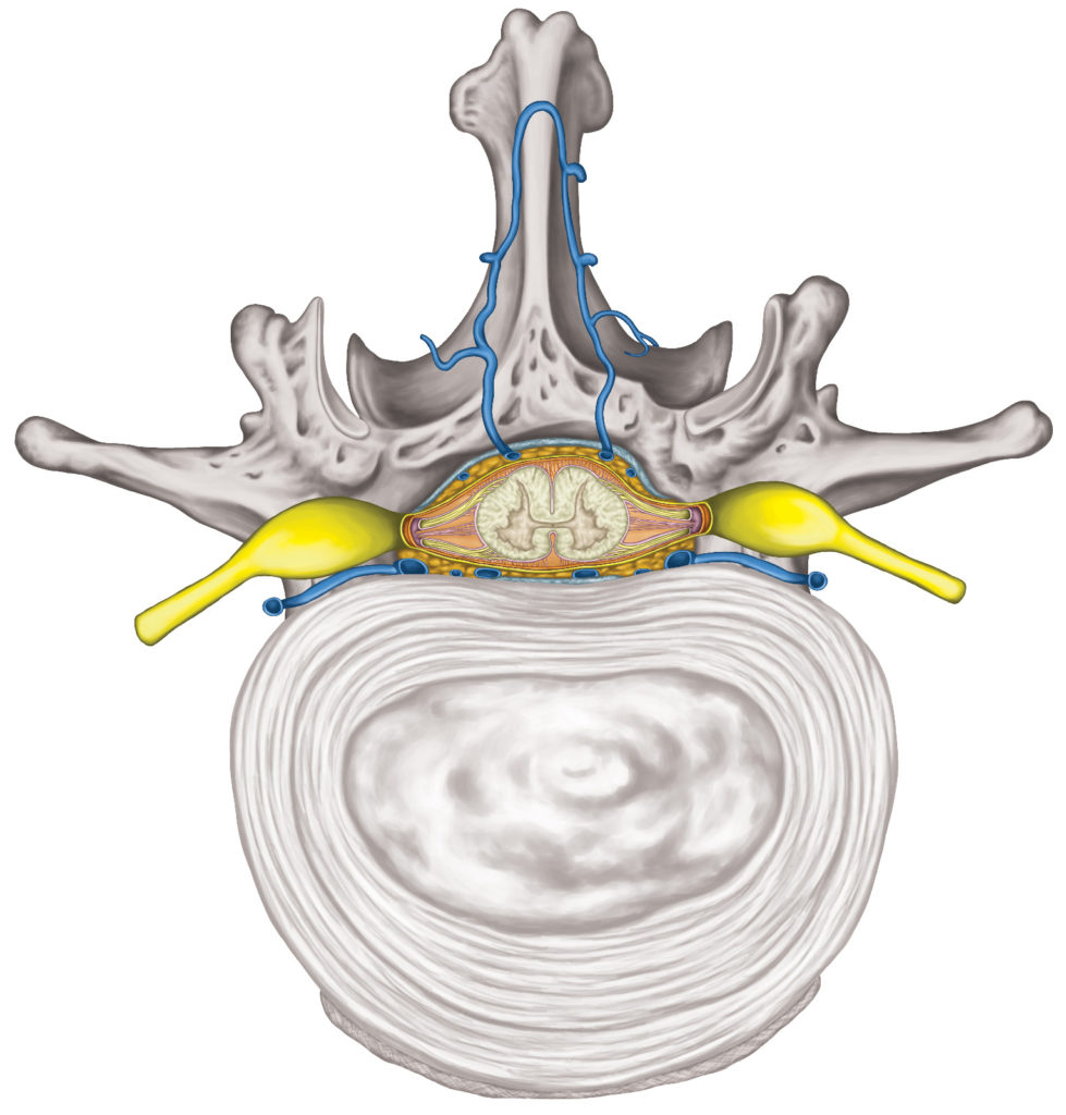 Chiropratik Bild 3